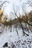 树在冬天,天 库存图片
