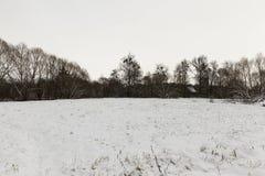 树在冬天,天 图库摄影