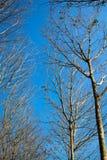 树在冬天 免版税库存图片