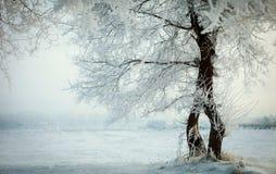 树在冬天2 库存照片
