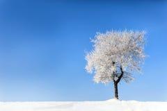 树在冬天4 免版税库存图片