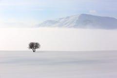 树在冬时的软,平静的环境里 免版税库存照片