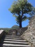 树在卡多佐,托斯卡纳 库存图片