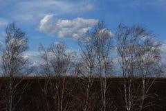 树在反对春天天空的草甸 免版税图库摄影