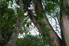 树在哥伦比亚 免版税库存图片