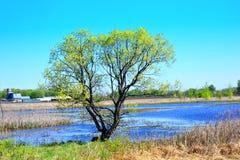 树在国家谷仓和池塘在背景中 免版税库存照片