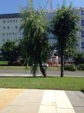 树在图兹拉 库存照片