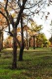 树在城市公园 免版税库存图片