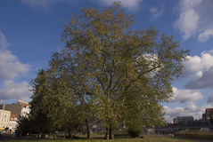 树在城市 库存照片