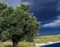 树在塔拉索纳西班牙 库存照片