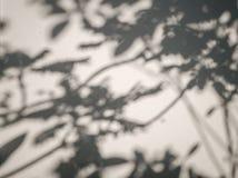 树在墙壁背景,抽象背景Cemen留下阴影 免版税库存照片