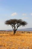 树在墨西哥沙漠 免版税库存图片