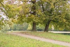 椴树在多云早晨在10月 库存照片