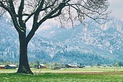 树在多雪的草甸, 4月天气 寒冷和潮湿 免版税库存照片