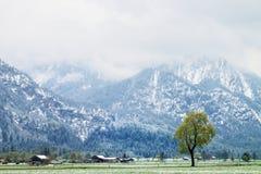 树在多雪的草甸, 4月天气 寒冷和潮湿 免版税库存图片