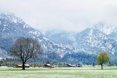 树在多雪的草甸, 4月天气 寒冷和潮湿 库存照片