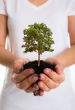 树在女性手上 免版税库存照片