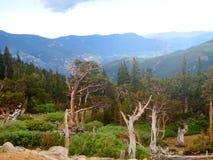 树在山的一个森林里 免版税库存照片