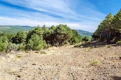 树在山脉de法国 免版税图库摄影