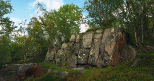 树在岩石增长在寒带草原 免版税图库摄影