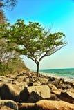 树在岸的增长的介于中间的岩石 库存照片
