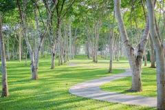 树在庭院背景中 树 免版税图库摄影