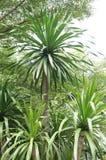 树在庭院里 免版税库存照片