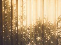 树在悬墙自然摘要背景留下阴影 免版税图库摄影