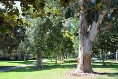 树在拉古纳森林排行了走道, Caliornia 免版税库存图片