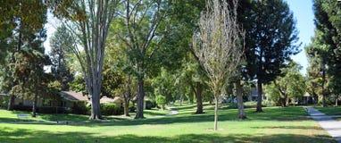 树在拉古纳森林排行了走道, Caliornia 免版税库存照片