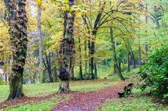 树在捷克公园,秋天季节排行了街道 免版税库存照片