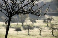 树在日出的春天 免版税库存图片