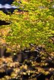 树在日本 免版税库存照片