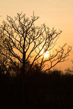 树在日落的冬天 库存照片