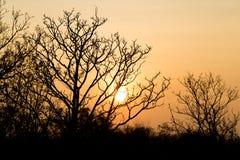 树在日落的冬天 免版税库存图片