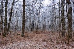 树在早期的冬天遮掩与霜 免版税库存图片