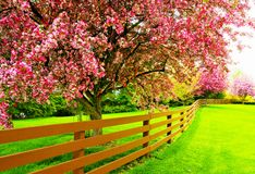 树在春天庭院里 库存图片