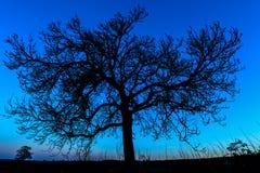 树在晚上-英国 库存照片