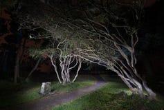 树在晚上 库存照片