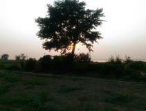 树在晚上 图库摄影