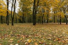 树在晚秋天的一个城市公园 免版税库存照片