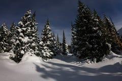 树在月光的冬天森林里在星下 免版税图库摄影