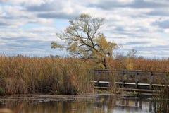 树在有一条木板走道的沼泽在一多云天 库存照片