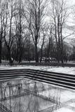 树在有反射的公园在玻璃 库存图片
