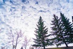 树在有多云天空的都市公园作为背景 免版税库存照片