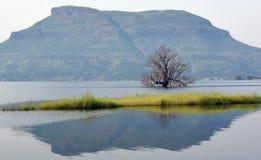 树在有山和它的反射的一个湖 库存照片