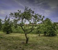 树在有有一点被覆盖的蓝天的公园 库存照片