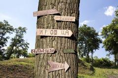 树在有标志的森林对此 图库摄影