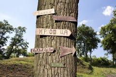 树在有标志的森林对此 免版税库存图片