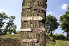 树在有标志的森林对此 免版税图库摄影